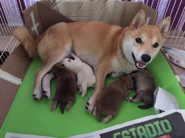 http://www.boredpanda.com/proud-dog-mothers