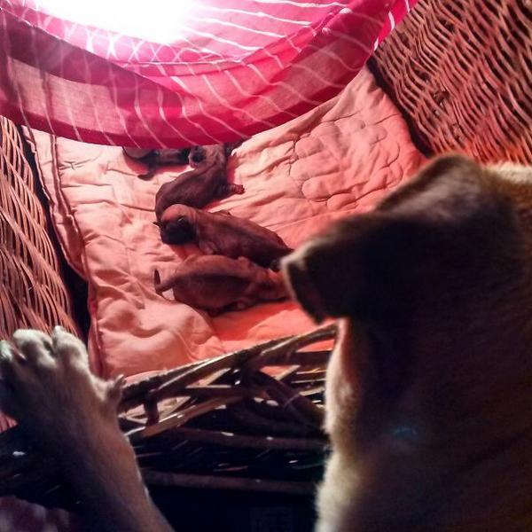 http://www.boredpanda.com/proud-dog-mothers/