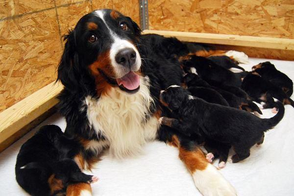 http://mbtimetraveler.com/2014/10/20/cute-dog-pics-for-your-monday-blues-2/proud-animal-parents-18/