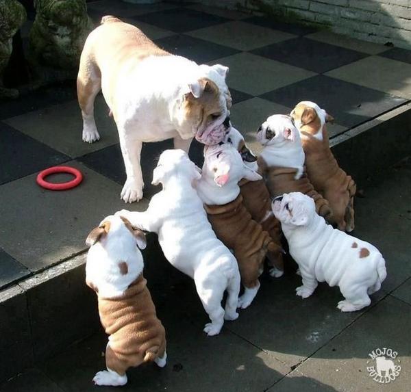 http://img.izismile.com/img/img6/20130419/640/these_funny_animals_1189_640_02.jpg