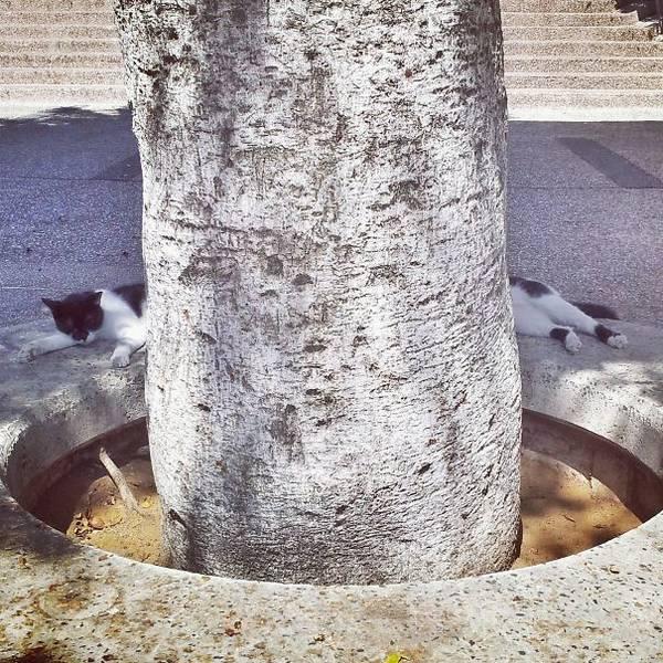 http://www.boredpanda.com/perfectly-timed-cat-photos/