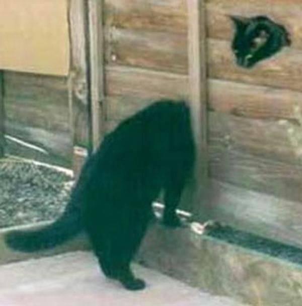 http://www.moillusions.com/cat-illusion/