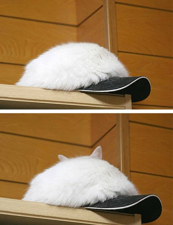 http://www.letslivelovelaugh.com/these-ninja-cats-will-beat-you-at-hide-and-seek/