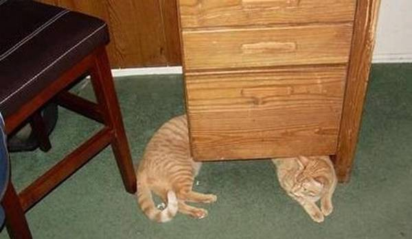 http://www.moillusions.com/sausage-cat-illusion/