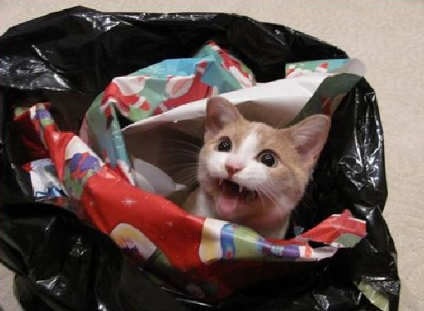 http://i0.wp.com/theverybesttop10.com/wp-content/uploads/2014/12/Top-10-Cats-Playing-With-Wrapping-Paper-10.jpg?resize=510%2C374