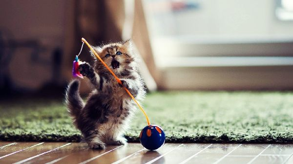 http://funnypicture.org/wallpaper/2015/05/funny-cat-playing-6-desktop-wallpaper.jpg