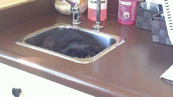 http://piximus.net/media/38562/cats-try-their-best-to-hide-from-the-vet-9.jpg