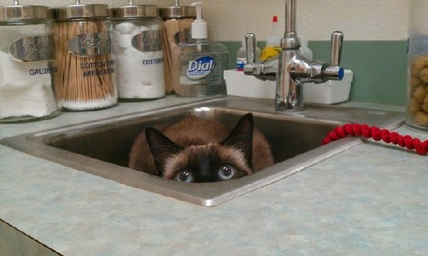 http://piximus.net/media/38562/cats-try-their-best-to-hide-from-the-vet-11.jpg