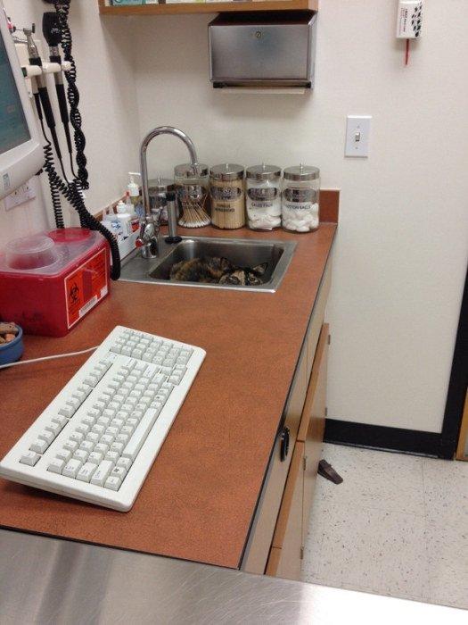 http://piximus.net/media/38562/cats-try-their-best-to-hide-from-the-vet-12.jpg