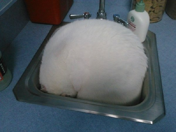 http://piximus.net/media/38562/cats-try-their-best-to-hide-from-the-vet-15.jpg