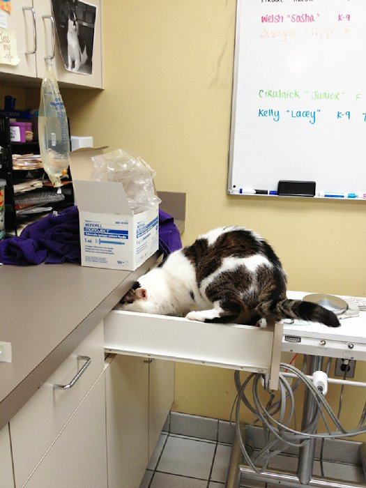 http://cdn.earthporm.com/wp-content/uploads/2015/10/XX-Cats-going-to-the-vet-9__605.jpg