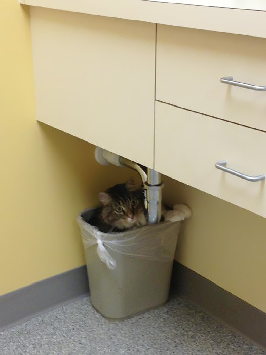 http://cdn.earthporm.com/wp-content/uploads/2015/10/XX-Cats-going-to-the-vet-27__605.jpg