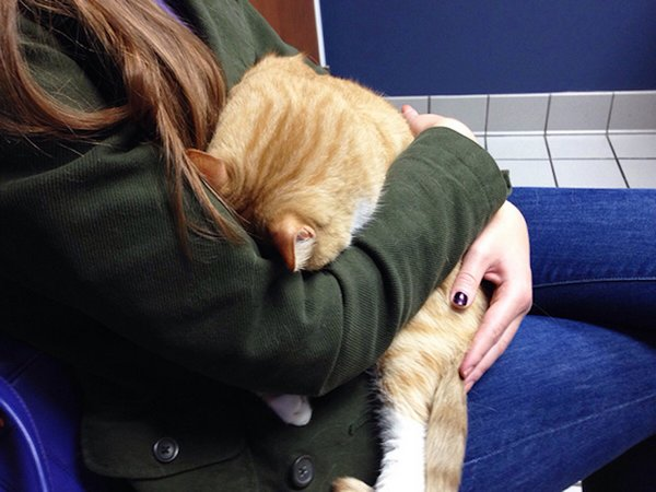http://cdn.earthporm.com/wp-content/uploads/2015/10/XX-Cats-going-to-the-vet-5__605.jpg