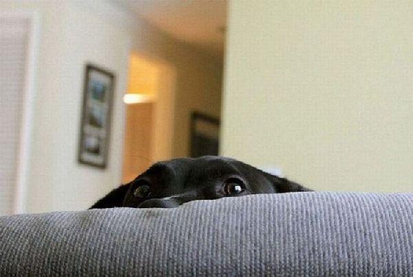 http://www.doodoo.ru/uploads/posts/2011-02/funny-animals-38.jpg
