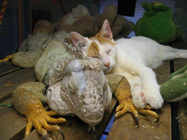 http://www.catsmob.com/post/2012/03/00455/funny_animals_catsmob_com_20120307_00455_022.jpg