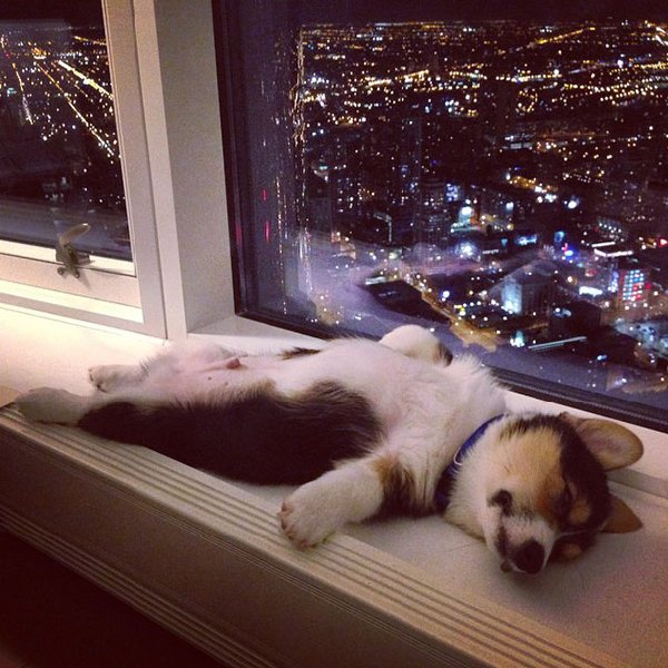 http://static.boredpanda.com/blog/wp-content/uploads/2015/07/sleeping-puppy-5__605.jpg