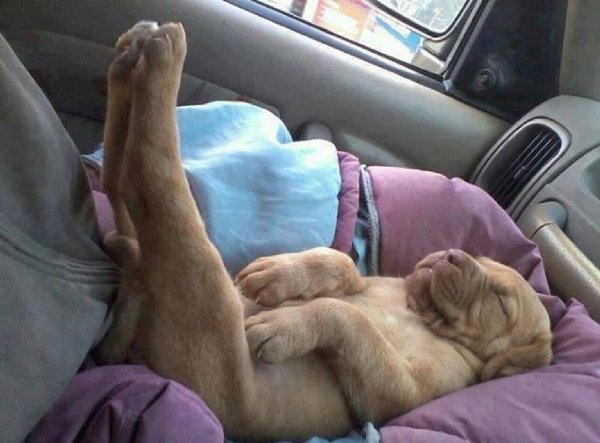 http://static.boredpanda.com/blog/wp-content/uploads/2015/07/sleeping-puppy-38__605.jpg