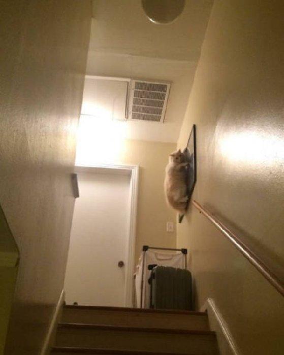 http://piximus.net/media2/39286/funny-animals-40-20.jpg