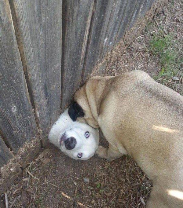 http://piximus.net/media2/39286/funny-animals-40-13.jpg