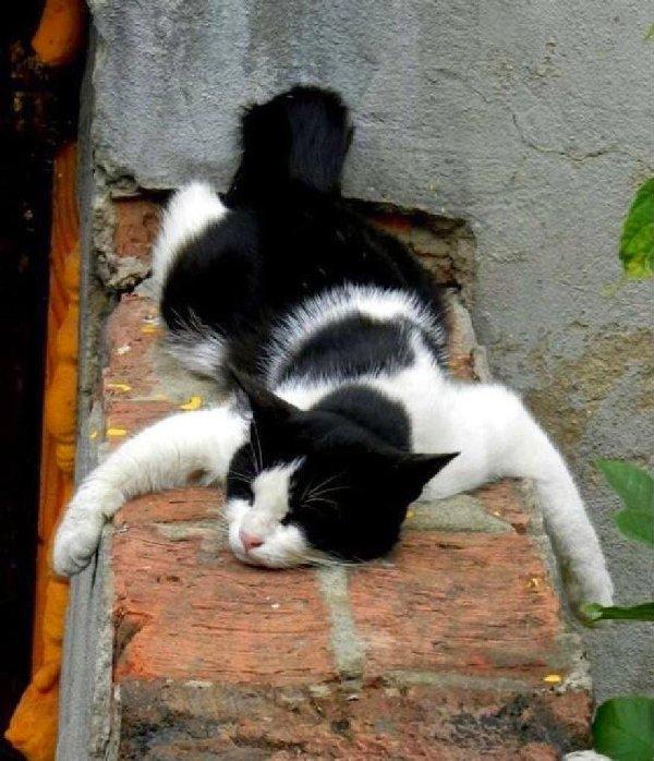 http://www.giftsplease.co.uk/wp-content/uploads/2015/01/relax-cat.jpg