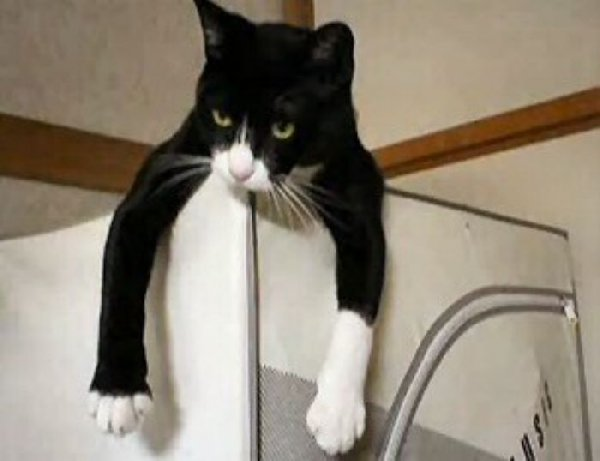 http://www.funny-cat-pictures.com/Funny-Cat-Photos/images/Balancing-Cat.jpg