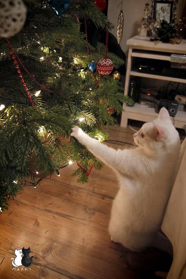 http://www.boredpanda.com/animals-destroying-christmas/