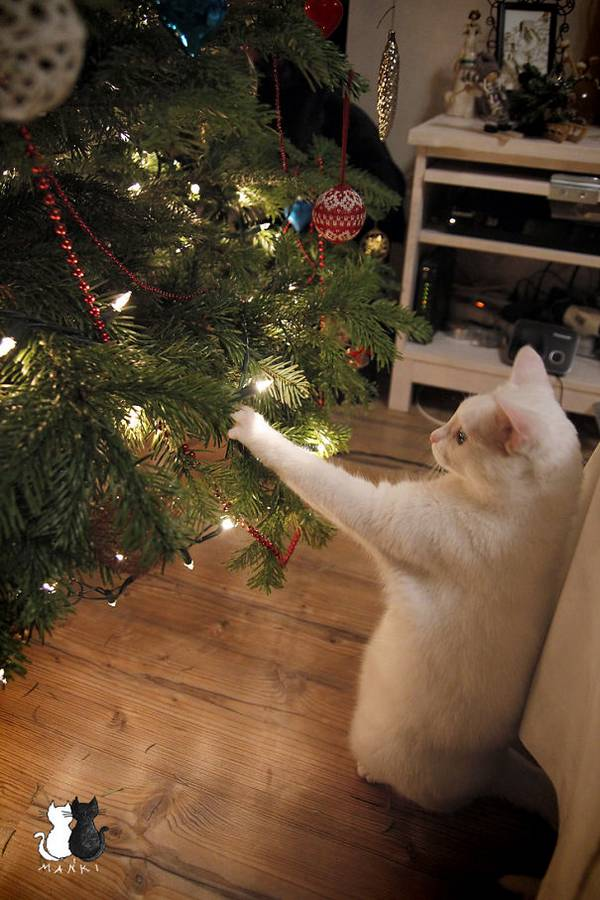 http://www.boredpanda.com/animals-destroying-christmas/