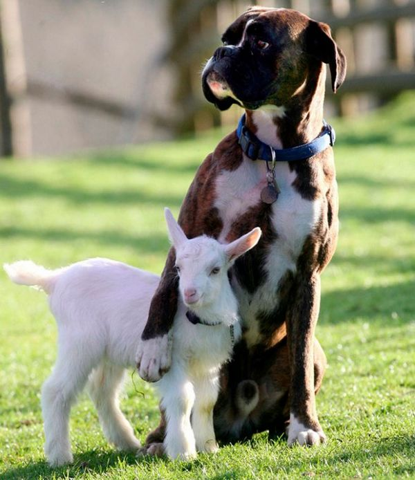 http://factologia.net/animals/575-tenderness-animals.html