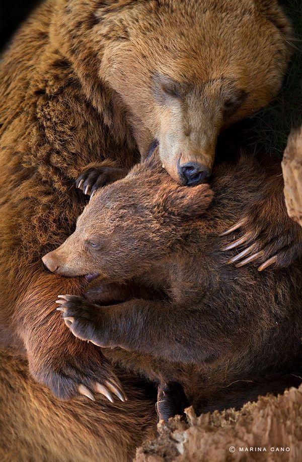 http://animalworld.com.ua/news/Dikaja-priroda-v-fotografijah-Mariny-Kano