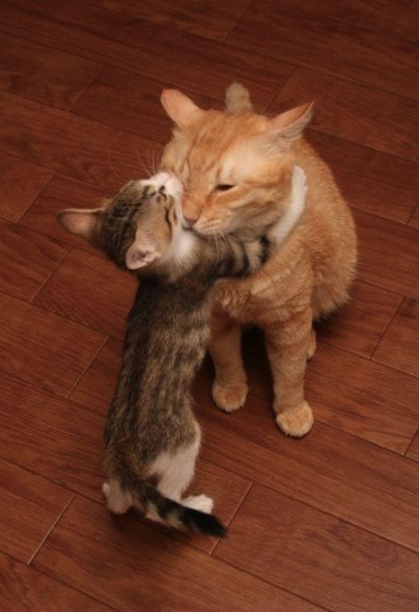 http://catshuggingthings.tumblr.com/page/20