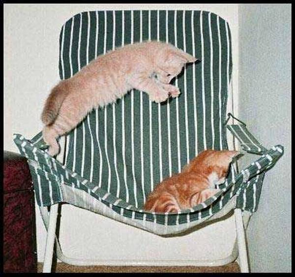 http://www.trichotomy.ca/images/cats/chairsurprise.jpg