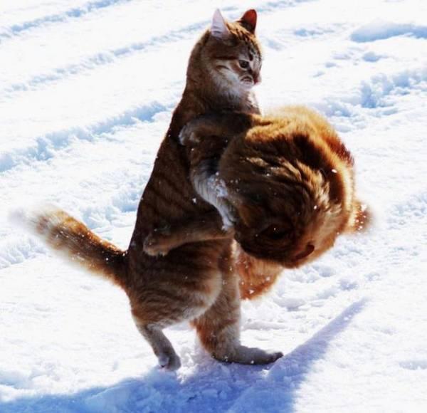 http://img.izismile.com/img/img5/20120229/640/these_funny_animals_914_640_07.jpg