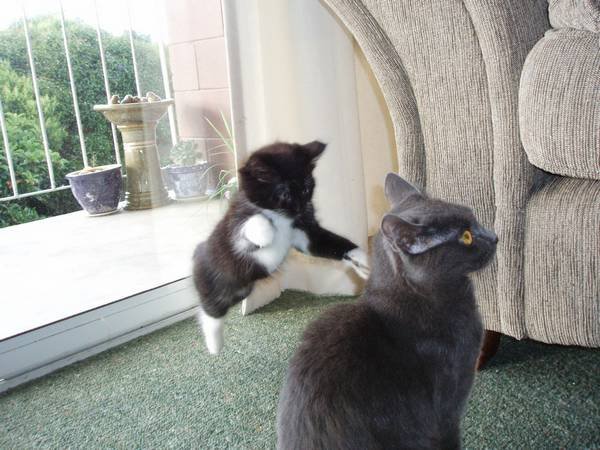 http://www.catsmob.com/animals/830-zabavnye-zhivotinki-63-40-foto.html