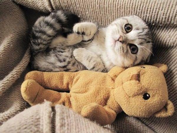 http://www.cat-tube.ru/2013/08/14