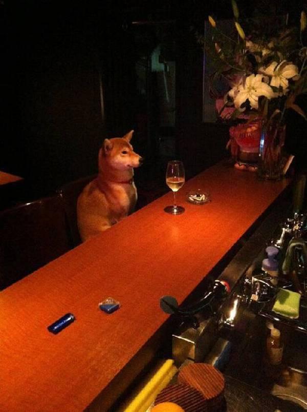http://cdn.viralscape.com/wp-content/uploads/2014/09/Dog-At-Bar.jpg