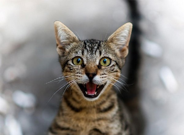 http://xn--90aj7b.xn--p1ai/images/other/smiliest_cats_on_the_internet/smiling_cat_funny_32.jpg