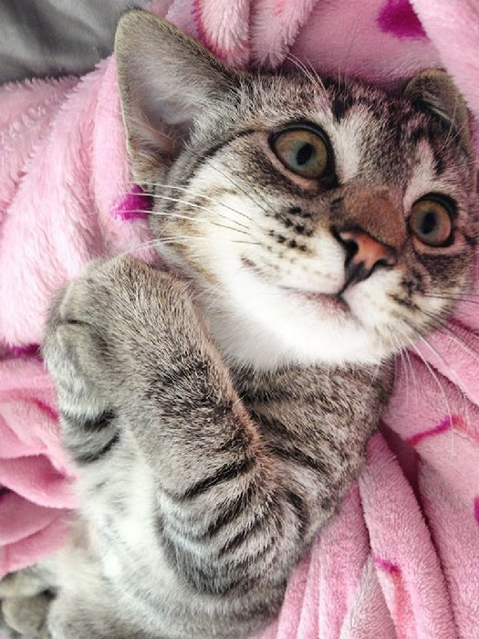 http://xn--90aj7b.xn--p1ai/images/other/smiliest_cats_on_the_internet/smiling_cat_funny_21.jpg