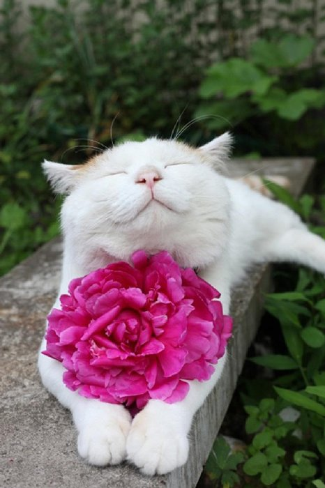 http://perfecto.buzz/wp-content/uploads/2015/07/16-smiliest-cats-internet_7bdc5e4d954381c6e51271a3b5f49d0a.jpg