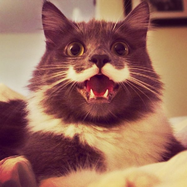 http://xn--90aj7b.xn--p1ai/images/other/smiliest_cats_on_the_internet/smiling_cat_funny_24.jpg