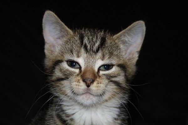 http://static.haisentito.it/haisentito/fotogallery/625X0/74707/gatto-mammone.jpg