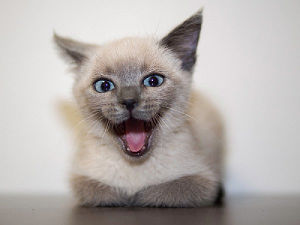 http://xn--90aj7b.xn--p1ai/images/other/smiliest_cats_on_the_internet/smiling_cat_funny_42.jpg