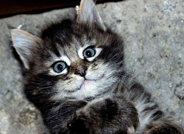 http://www.szeretlekmagyarorszag.hu/wp-content/uploads/2015/09/happy-cat-smiling-17__880.jpg