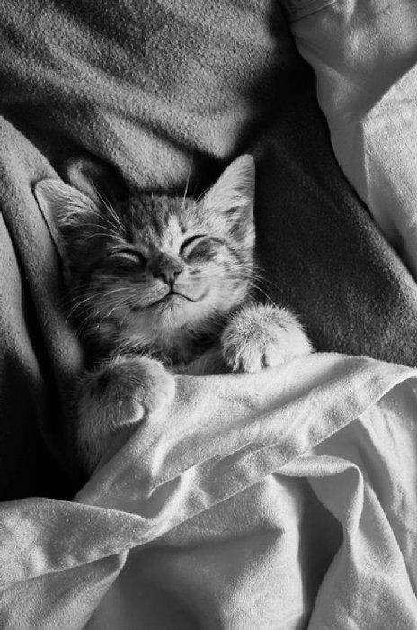 http://perfecto.buzz/wp-content/uploads/2015/07/16-smiliest-cats-internet_4750ba5e9029241d741f59ece17e43ea.jpg