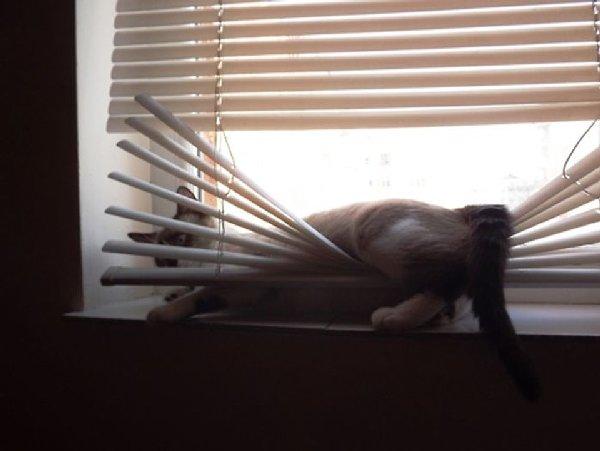 http://cdn.free1.cz/media_object/2014/11/25/31975/7/cats_have_zero_respect_19.25820392.jpg