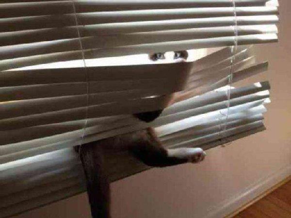 http://keepthatlol.com/wp-content/uploads/2015/03/11-Cats-That-Could-Use-a-Little-Help-Pleez-9.jpg