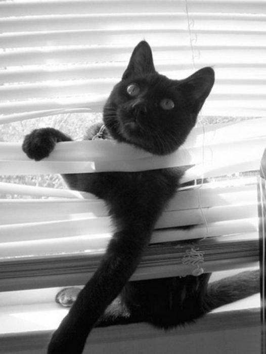 http://bestpozitiv.ru/wp-content/uploads/2013/09/cats_22.jpg
