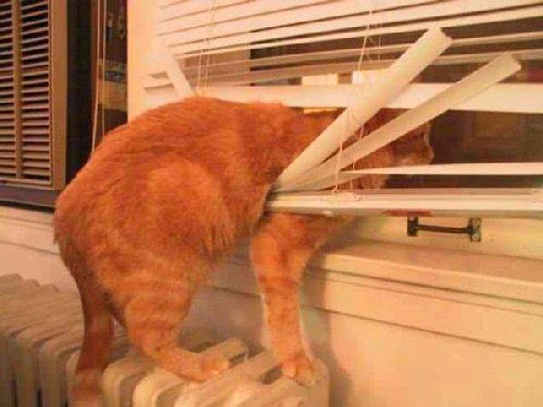 http://1.bp.blogspot.com/-qIkA7wOvTqA/Uj31MkEjtHI/AAAAAAAJ6IQ/tRHhDweo70w/s1600/cats_vs_blinds_11-777212.jpg