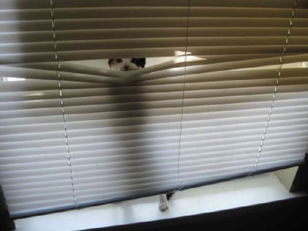 http://bestpozitiv.ru/wp-content/uploads/2013/09/cats_10.jpg