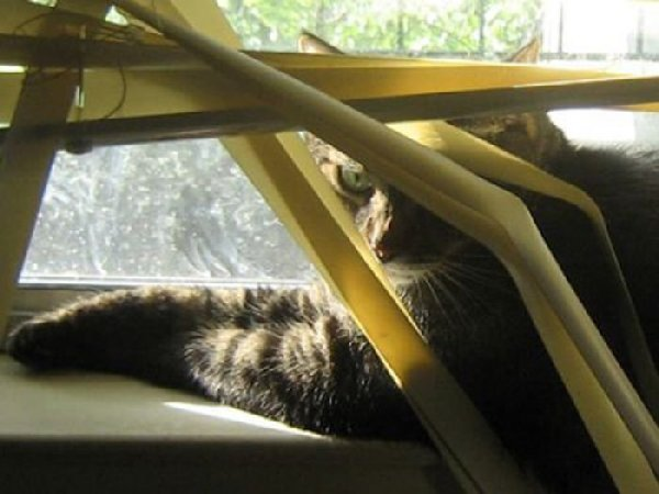 http://bestpozitiv.ru/wp-content/uploads/2013/09/cats_14.jpg