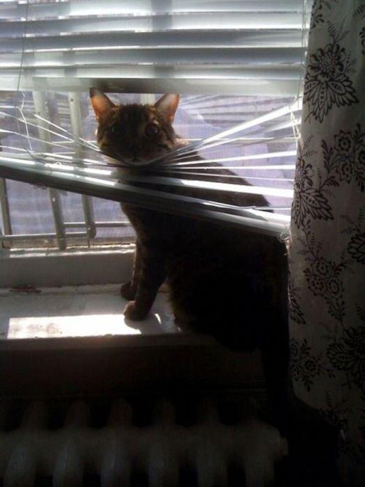 http://bestpozitiv.ru/wp-content/uploads/2013/09/cats_20.jpg